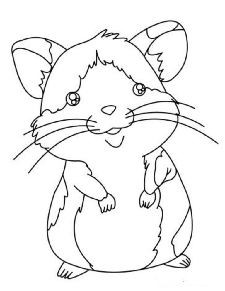 Hamster Coloring Pictures