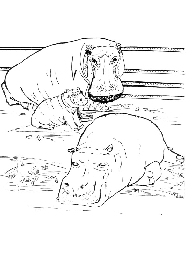 Hippopotamus Colouring Pages to Free Downloads