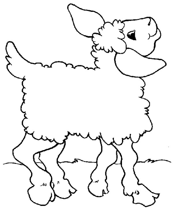 lamb posing for picture to print