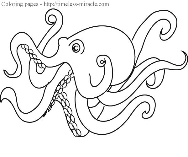 Octopus To Color