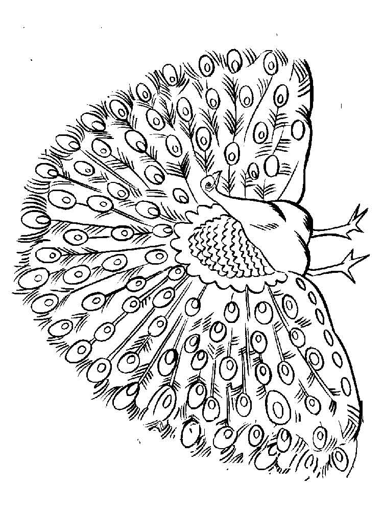 Peacock Coloring Sheet