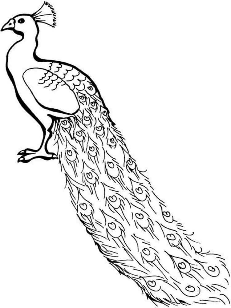 Peacock Colouring Pictures