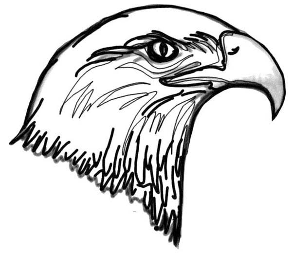 picture of Bald Eagle Coloring Page