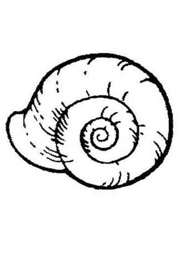 Seashells Printable Pictures