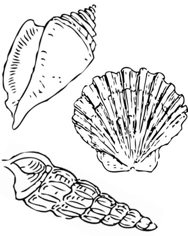Seashells Printables