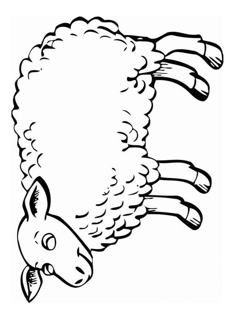 Sheep Pictures To Color