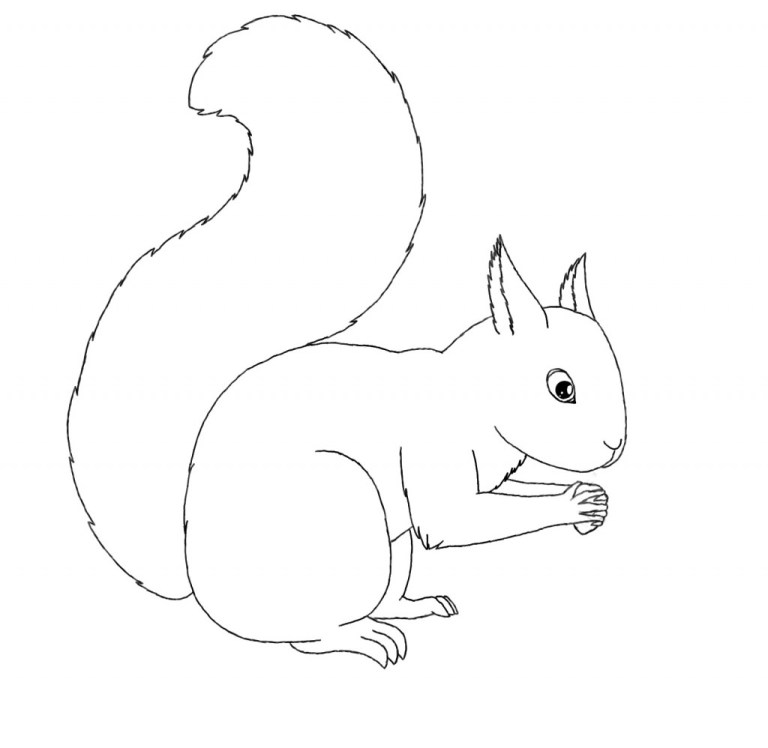 Squirrel Pictures To Print