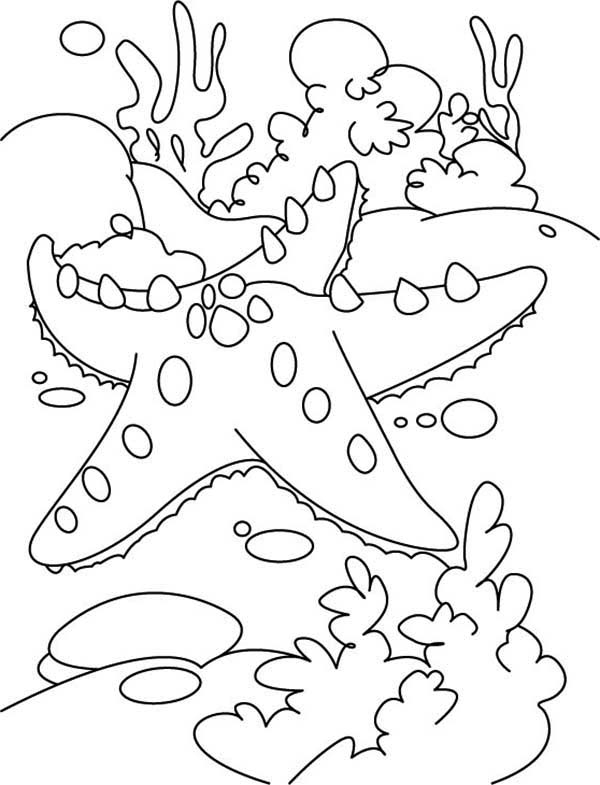 Starfish Coloring Sheets