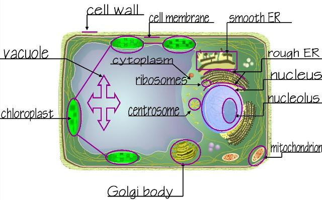 animal cell coloring page answers coloring pages printable on mr - Animal Cell Coloring Page Answers