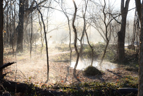 RVA Pony Pasture Foggy Morning