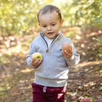 fall activities carter mountain apple orchard