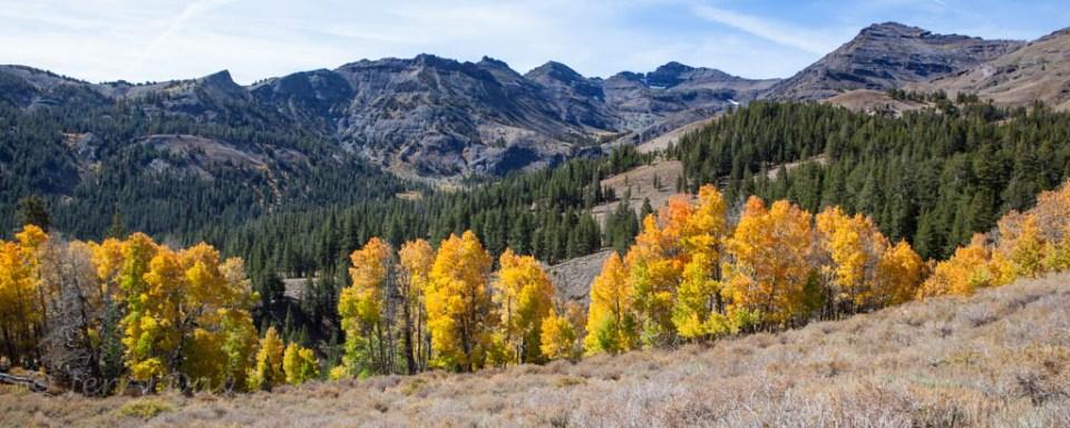 Colorful Fall Aspen in Sonora Pass, California
