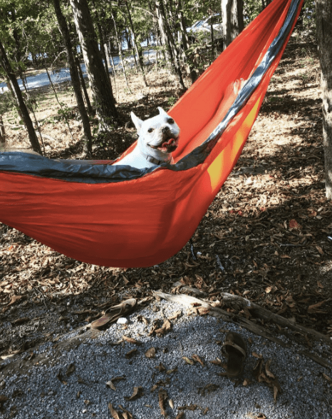 french bulldog hammock
