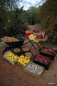 Bountiful farmproduce