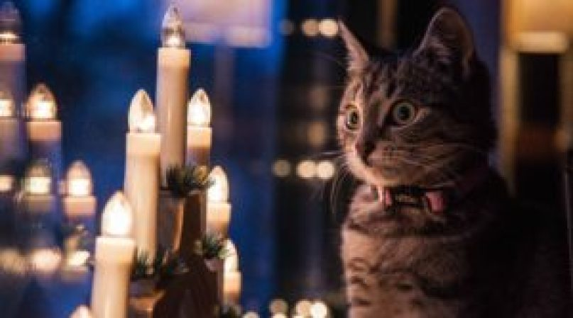 Advent light, Christmas, cat, Iceland, Christmas traditions