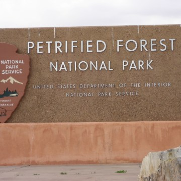 Petrified Forest N.P.