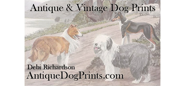Tin Teddy Vintage is now.. Antique Dog Prints – Etsy shop name change