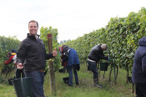 The owner Art, picking grapes for harvest