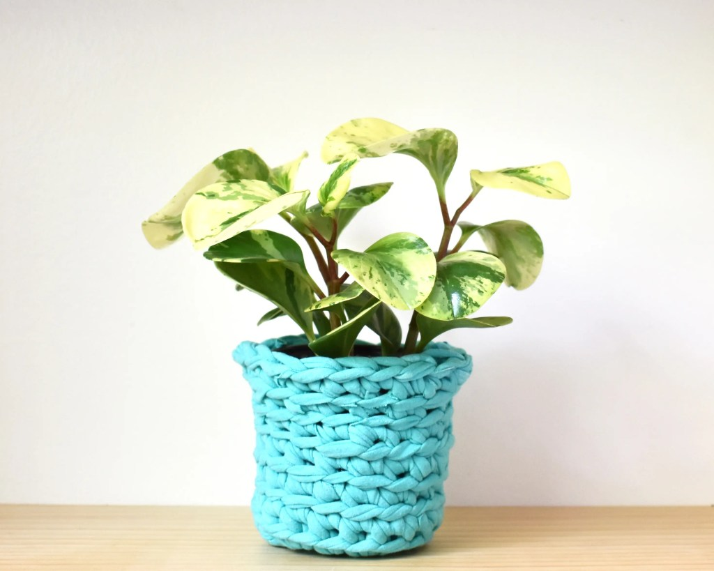 A variegated rubber plant in a crochet plant pot cover made with teal t-shirt yarn on a light wooden surface.