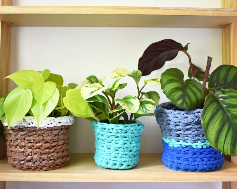 Three plants sit side by side on a light wooden shelf. They are in crocheted plant cozies of various colors.