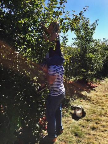 Apple-picking-recipe-01
