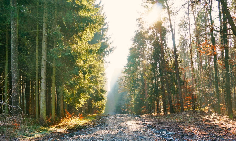 Take a walk into the woods of Hermsdorf, Germany