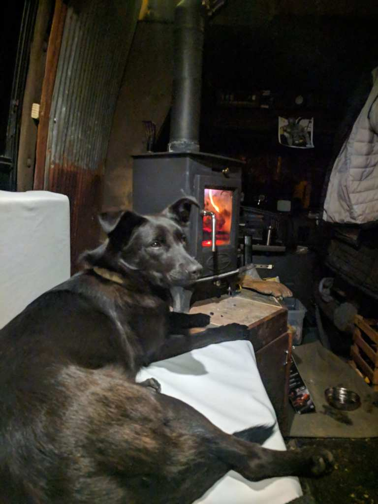 Cozy Dog By the Fire