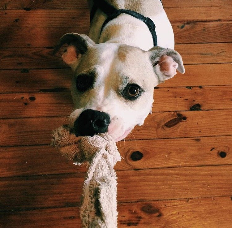 zero waste dog toy
