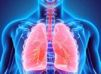 solunum sistemi görevleri anatomisi