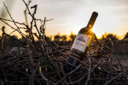 vino bianco del salento tenuta coloni torre ospina
