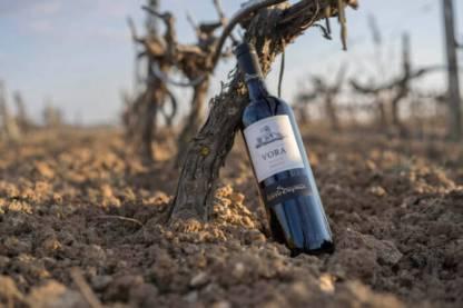 vino primitivo tenuta vora torre ospina