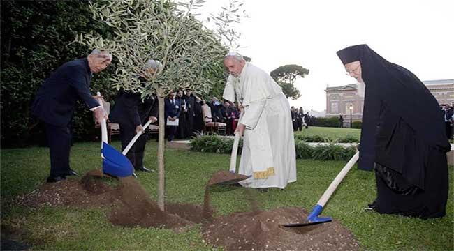 papa-pianta-olivo