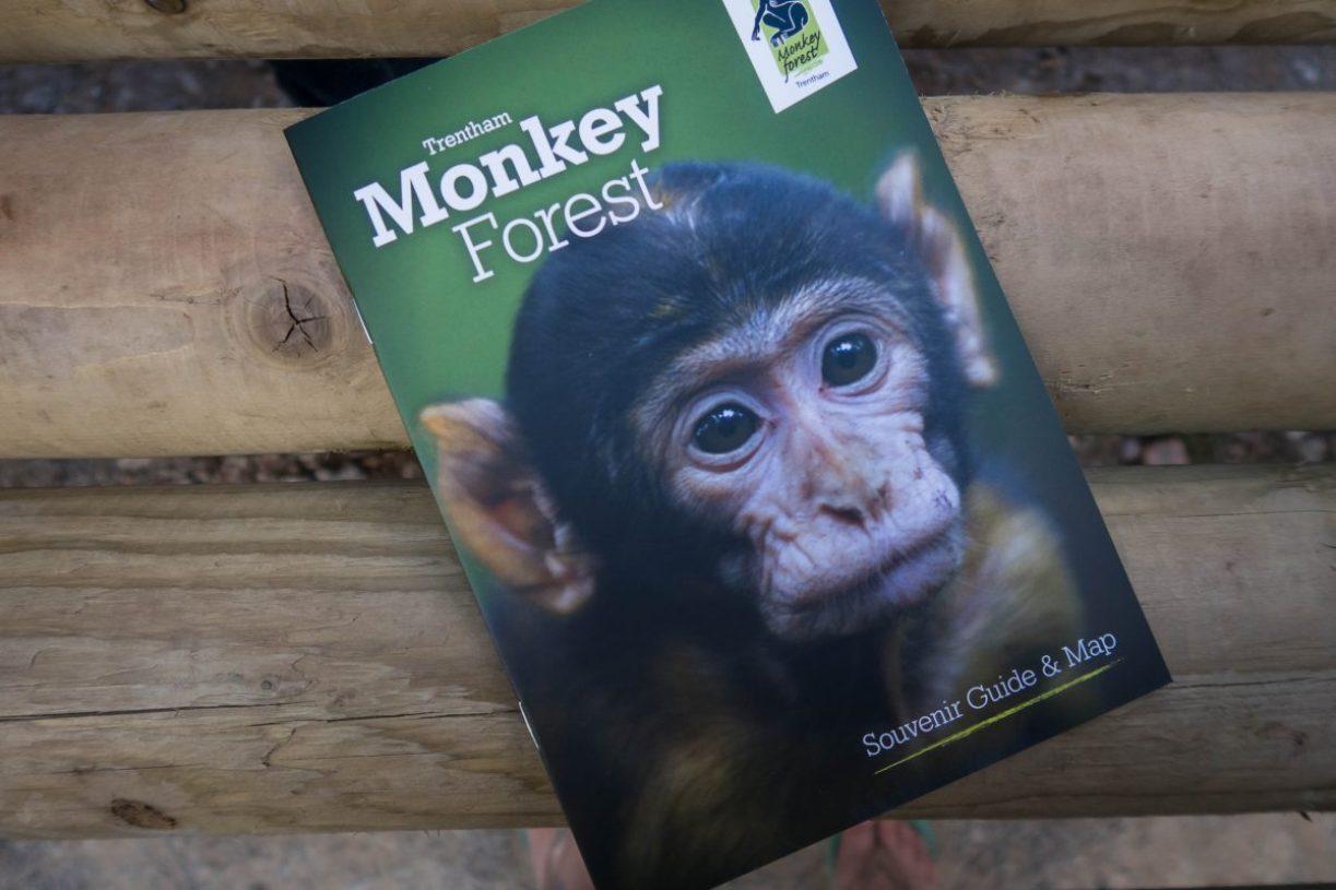 Monkey Forest - blog post header