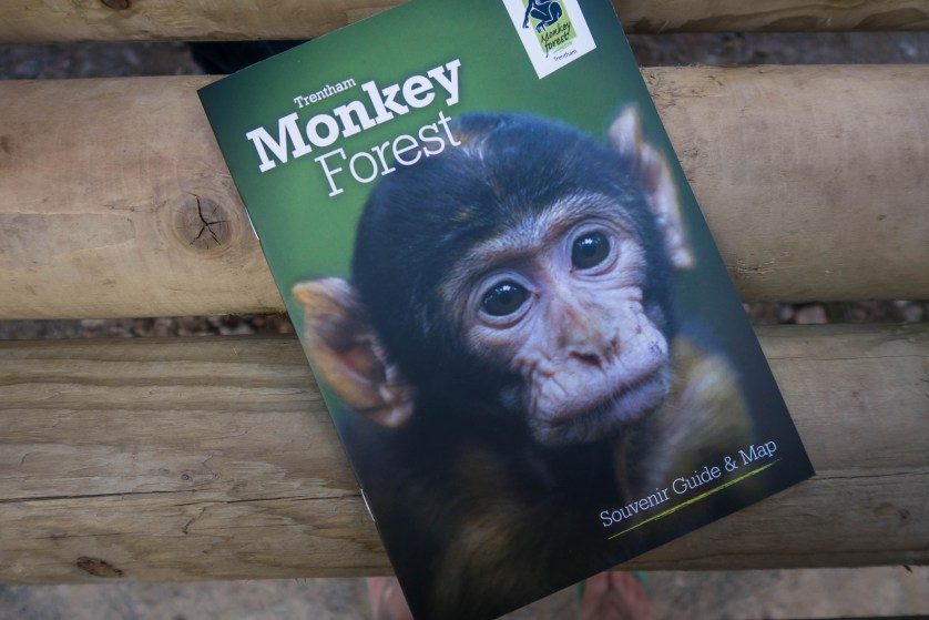 Fun for little monkeys at Monkey Forest