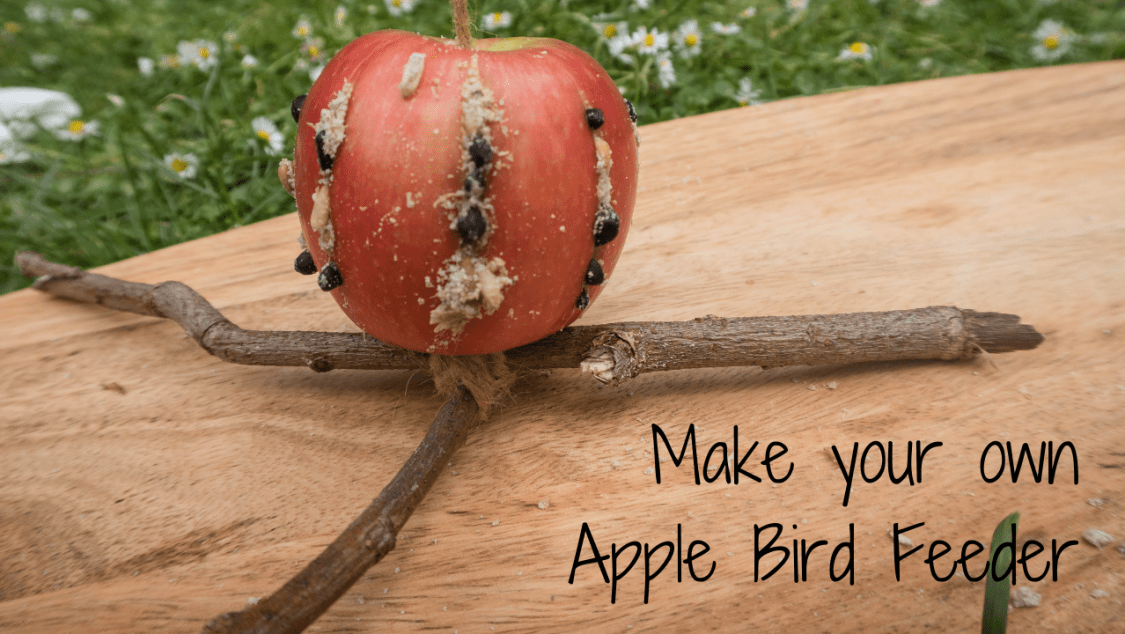 Make Your Own Apple Bird Feeder - blog post header