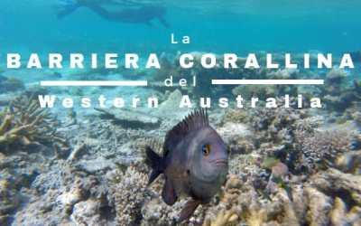 La BARRIERA CORALLINA del Western Australia: da Exmouth a Coral Bay