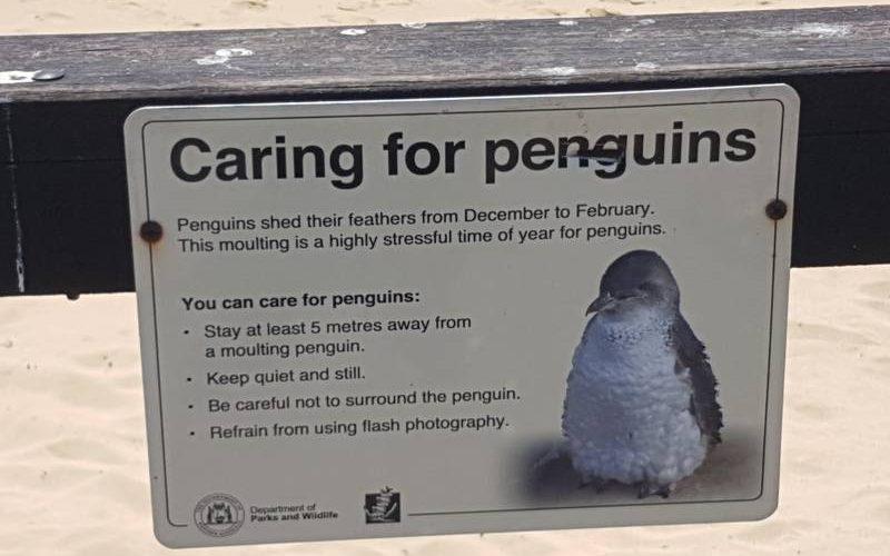 Cartello per salvaguardare i pinguini di Penguin Island