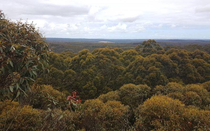 Vista della foresta da osservatorio del Diamond Tree