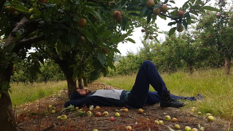 Riposo durante raccolta mele in Tasmania per gli 88 giorni di Farm australiani