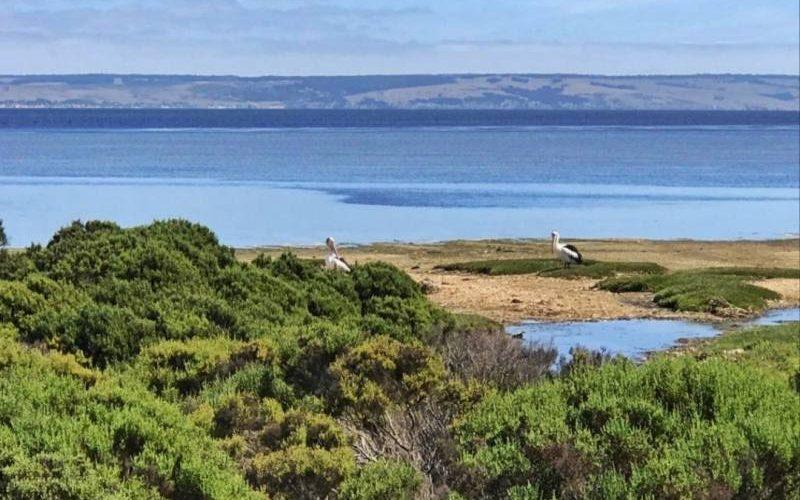 "Vista dal capanno ""Foreshore Birdlife"" ad American River a Kangaroo Island"