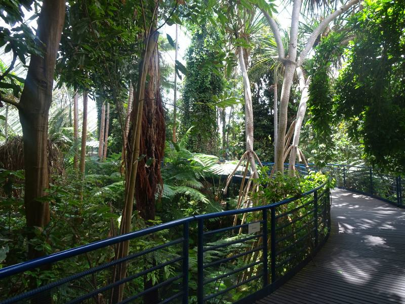 Passerella e alberi nel percorso interno del Bicentennial Conservatory nel Giardino Botanico di Adelaide