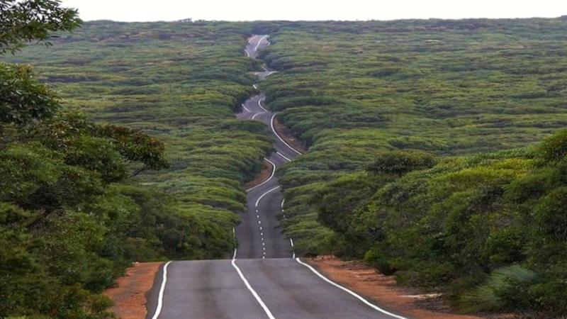 Una delle strade più famose d'Australia, quella per andare alle Remarkable Caves di Kangaroo Island