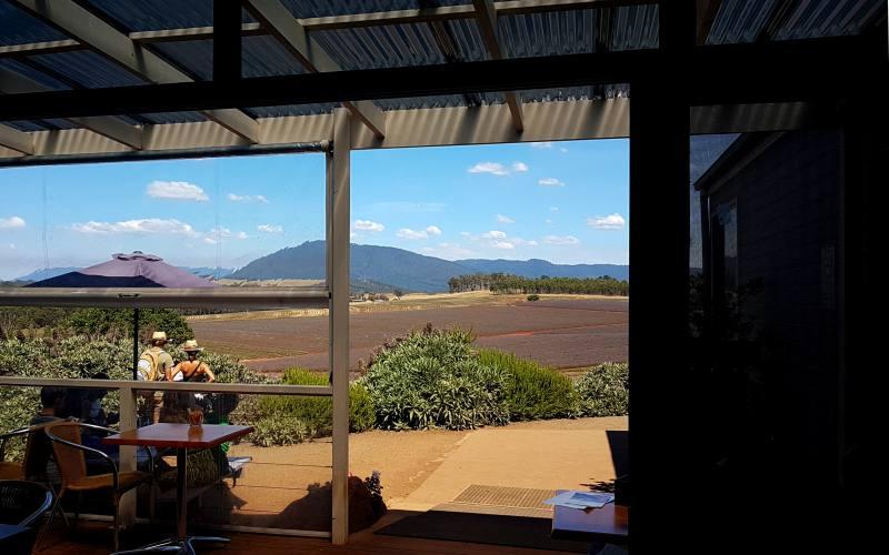 Vista dall'ingresso della Farm di lavanda più grande in Tasmania