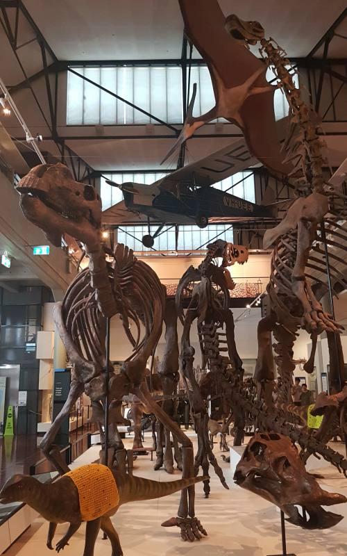 Ricostruzione scheletri dei dinosauri dentro il museo Queen Victoria Museum di Launceston nel Nord della Tasmania