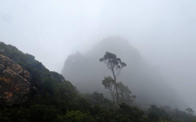 """Il percorso """"The Labyrinth"""" nella Pine Valley completamente coperto dalla nebbia"""