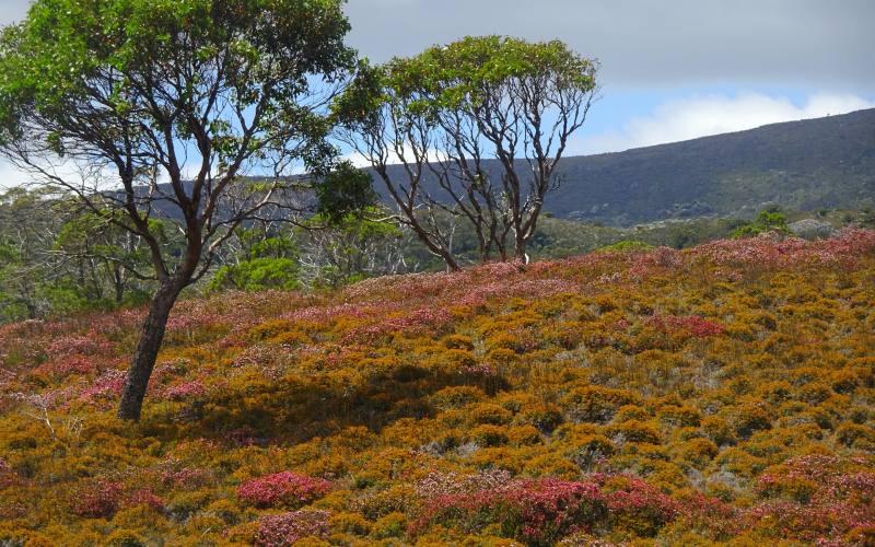 """Paesaggi montani e colorati durante i percorsi all'interno del Parco """"Cradle Mountain - Lake St Clair"""" in Tasmania"""