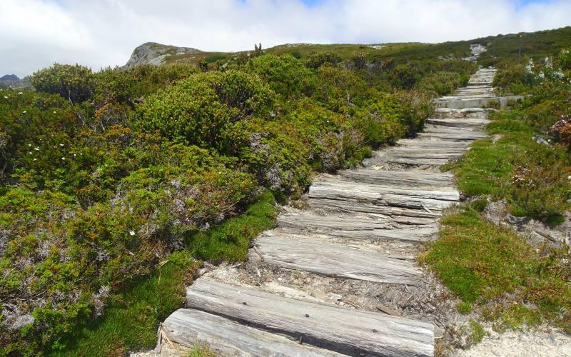 """Ripida salita sulle travi di legno del percorso """"Horse Track"""" a Cradle Mountain in Tasmania"""