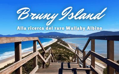 BRUNY ISLAND, alla ricerca del raro Wallaby Albino
