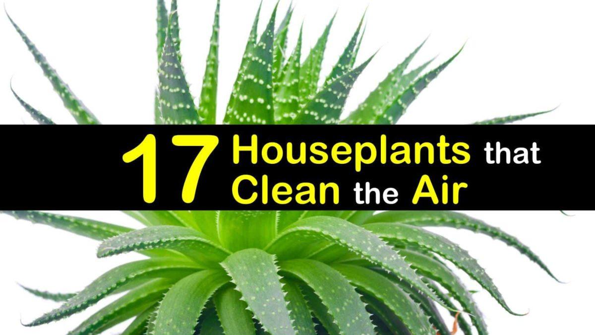 plants that clean the air t1