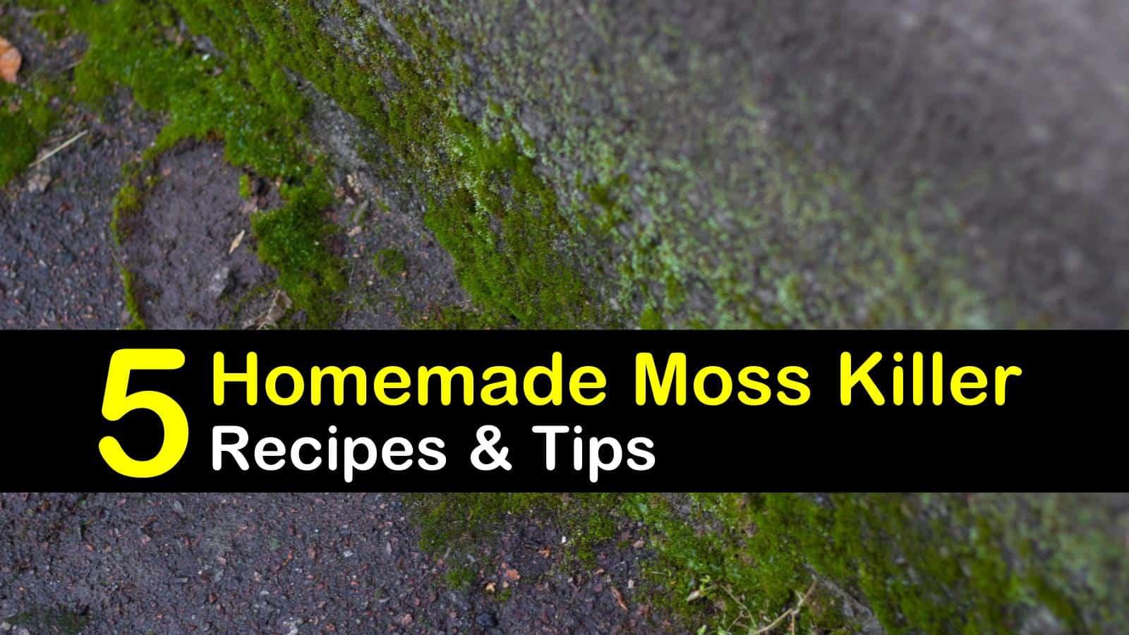 homemade moss killer recipes 5 natural